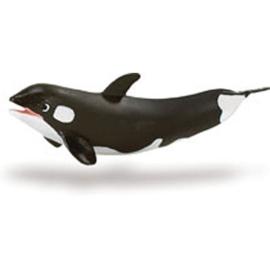 Orca kalf  S275229