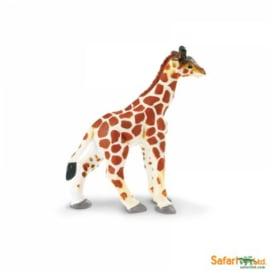 Giraffe kalf  S270729