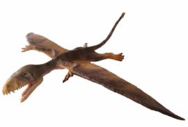 """Dimorphodon """"Judy"""" Rebor"""