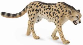 Cheetah  (King-)   CollectA 88608