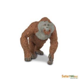 Orangutan man  S292929