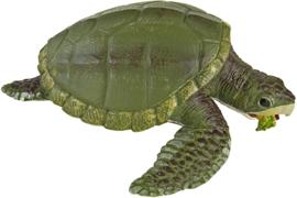 Kemp's Ridley zeeschildpad S262429