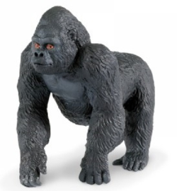 Gorilla  S282829
