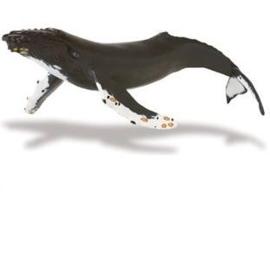 Bultrug (Serie Monterey Bay Aquarium)