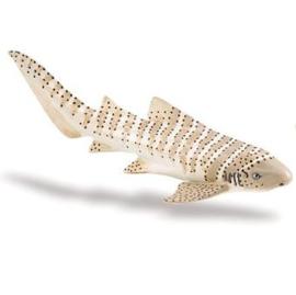 Zebra Shark  S223329