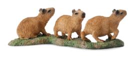 Capibara jongen   CollectA 88541