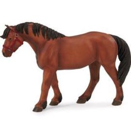 Iers trekpaard  XL Safari 115089