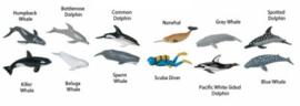 Walvissen & Dolfijnen S694704