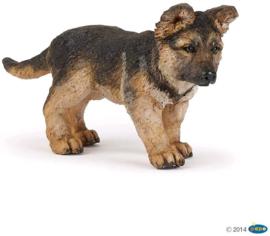German shepherd pup Papo 54039