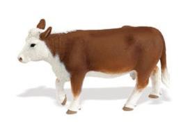 Hereford koe Safari 160029
