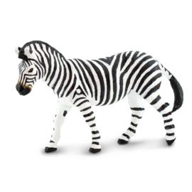 Zebra  Steppenzebra  S100689