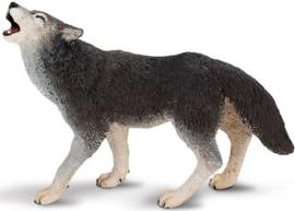 Grijze wolf  S273829