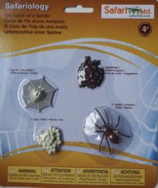 Spin levenscyclus