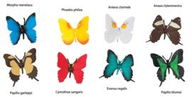 Butterflies   S684504