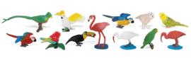 Exotische vogels  S680404