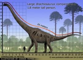 Brachiosaurus CollectA 88121