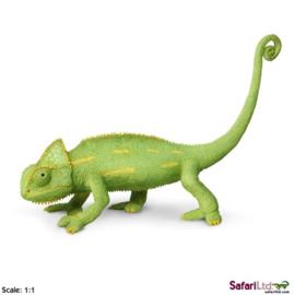 Kameleon jong  S261029