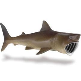 Basking Shark  S223429