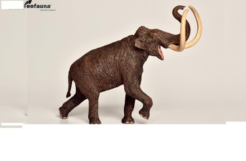 Mammoth       Mammuthus  trogontherii