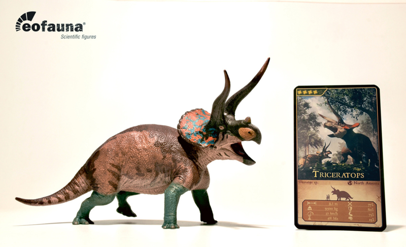 Triceratops sp. Cryptic | nu leverbaar | EoFauna