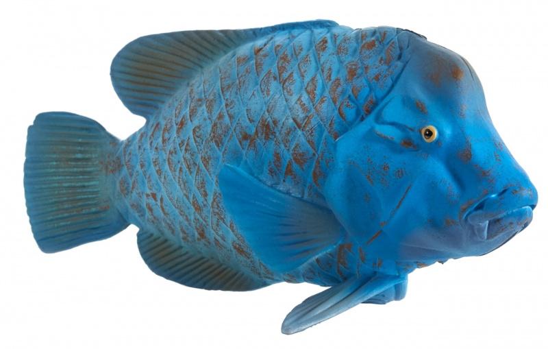 Blue grouper  Mojo 387356
