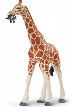 Giraffe  S268429