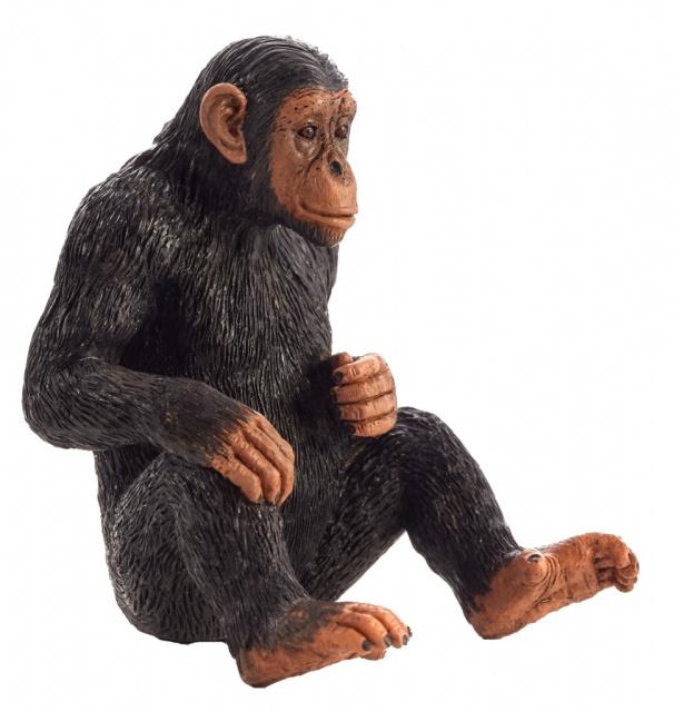 Chimpansee  Mojo 387265