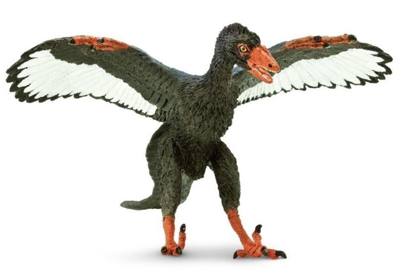 Archeopteryx  S302829