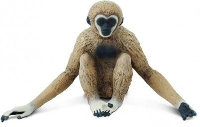 Gibbon  S228329