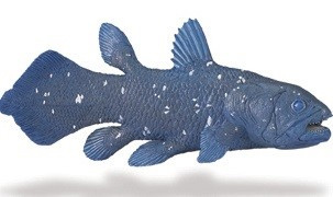 Coelacanth  S285729