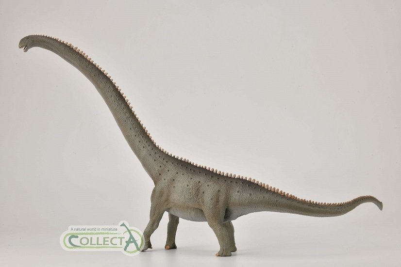 Mamenchisaurus collecta 2021