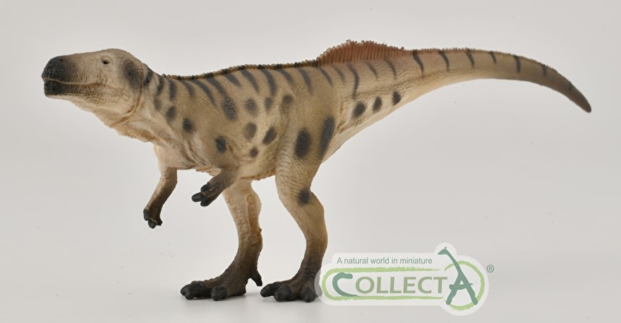 Megalosaurus collecta 2021