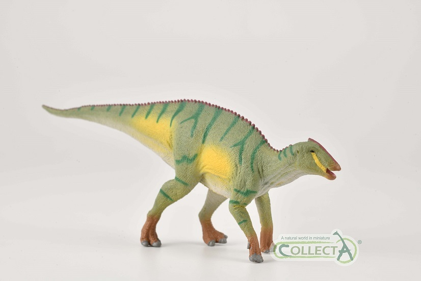 Kamuysaurus collecta 2021