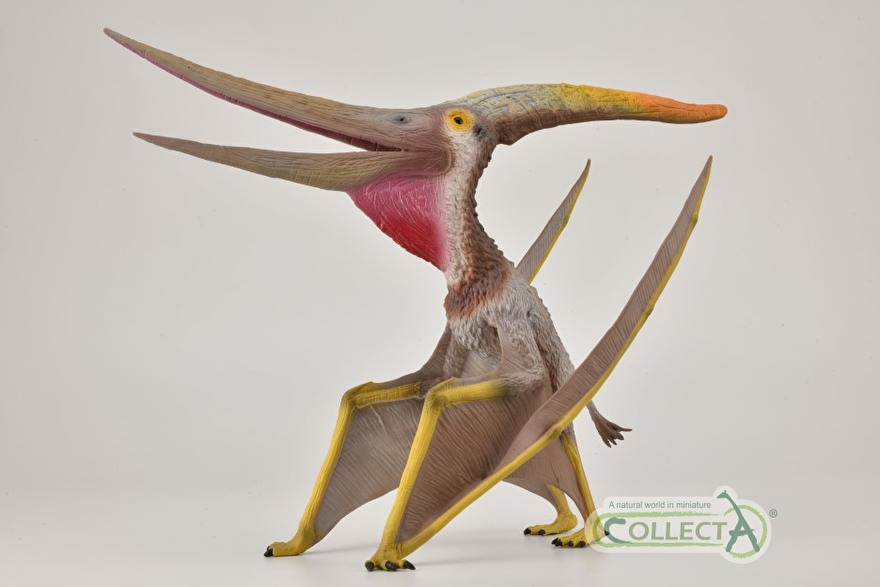 Pteranodon collecta 2021