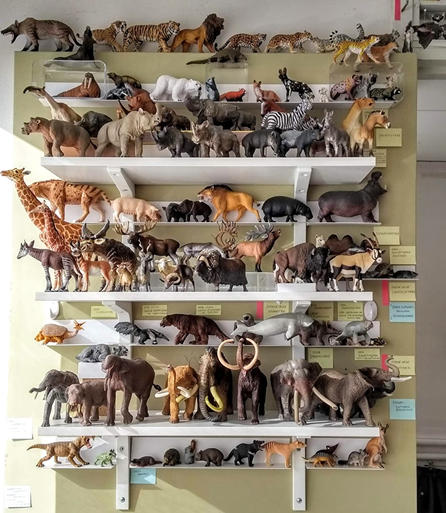 phylogenie zoogdieren