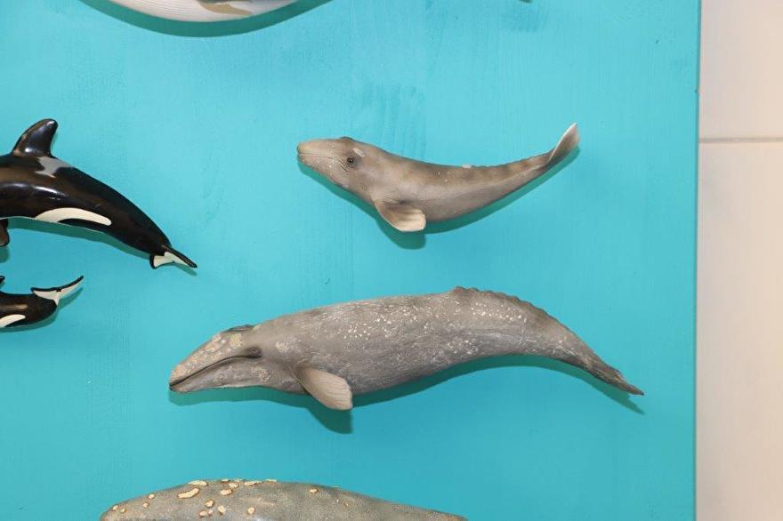 walvissen collecta