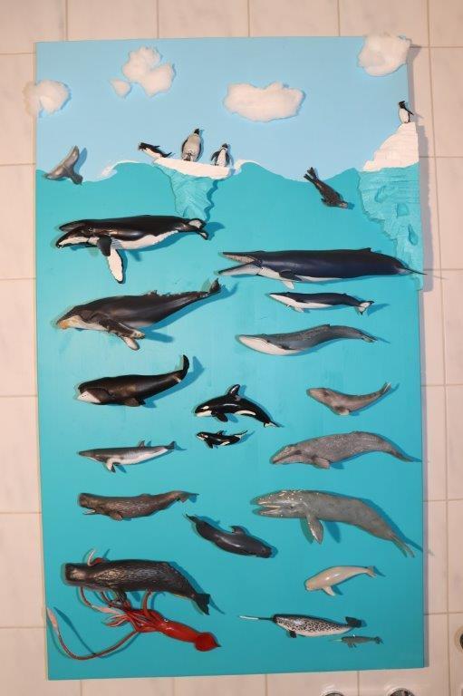 zeedieren display collecta