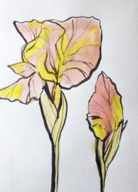 Iris Drawing in Pink