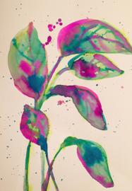 Splashes of Fuchsia