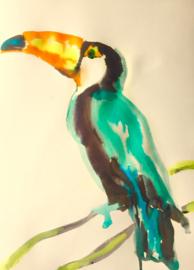 Tucan Turquoise