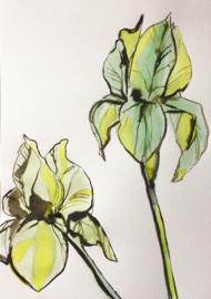 Iris Drawing in Green