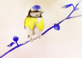 Bird on a Blue Wire