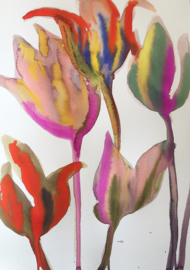 Tulipa Multicolor