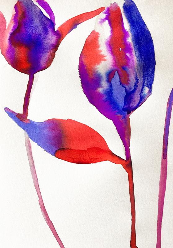 Tulipa Red & Blue