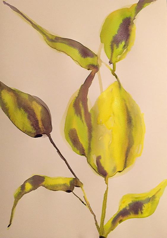 Lime- a- Licious
