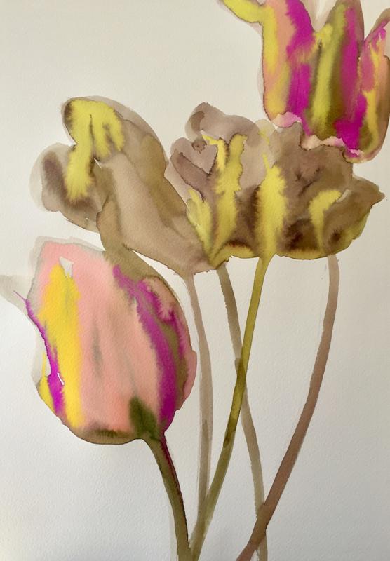 Tulipa Breeze