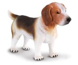 beagle 88177