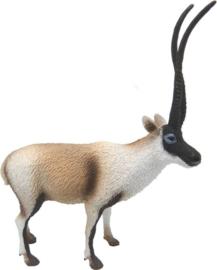 tibetaanse antilope 88721
