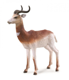 dama gazelle 88865