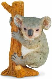 koala klimmend 88356